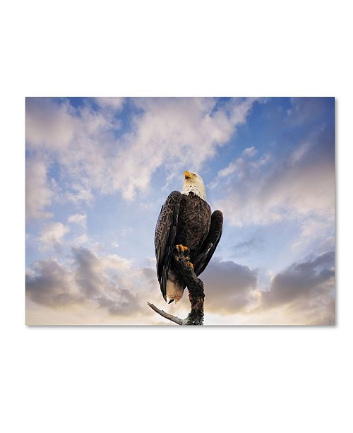 """Trademark Global Jai Johnson 'View From The Top Bald Eagle' Canvas Art - 32"""" x 24"""" x 2"""""""