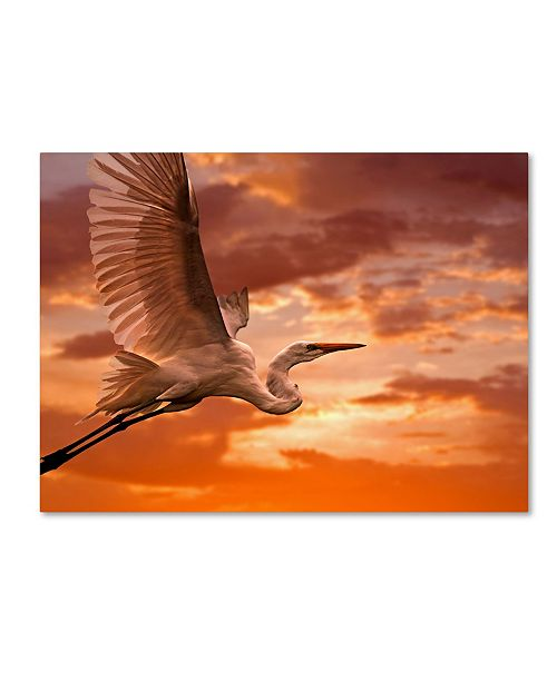 "Trademark Global Mike Jones Photo 'Heron Sunset' Canvas Art - 47"" x 35"" x 2"""