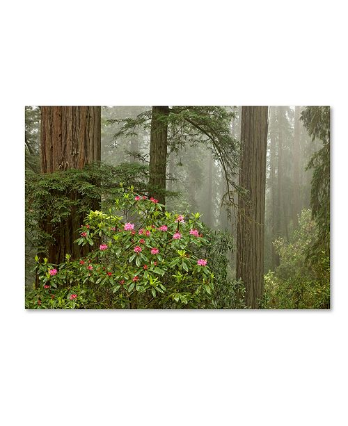 "Trademark Global Mike Jones Photo 'Redwood Fog Rhododendrons' Canvas Art - 24"" x 16"" x 2"""