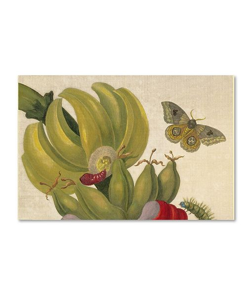 "Trademark Global Vintage Lavoie 'Maria Sibylla Merian' Canvas Art - 24"" x 16"" x 2"""