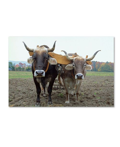 "Trademark Global Robert Harding Picture Library 'Animals On Farm' Canvas Art - 19"" x 12"" x 2"""