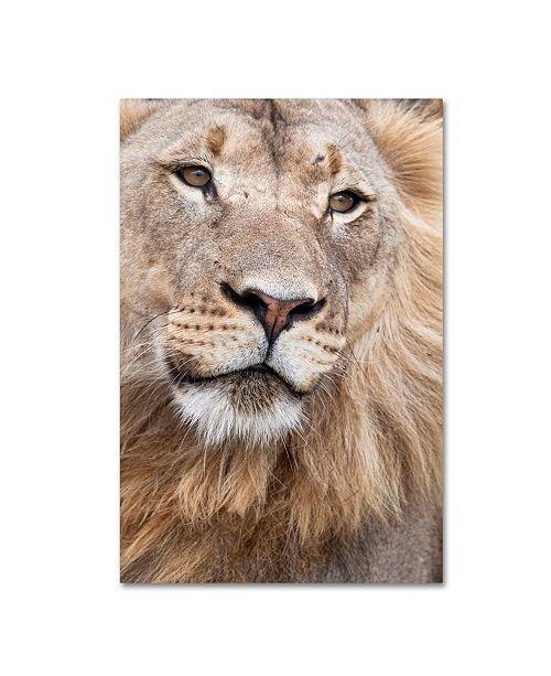 "Trademark Global Robert Harding Picture Library 'Lion' Canvas Art - 32"" x 22"" x 2"""