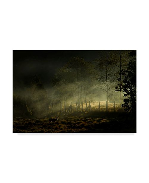 "Trademark Innovations Nunu Rizani 'Misty Morning Forest' Canvas Art - 19"" x 2"" x 12"""
