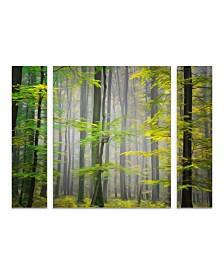 "Philippe Sainte-Laudy 'Sugar Low' Multi Panel Art Set Large 3 Piece - 44"" x 34"" x 2"""