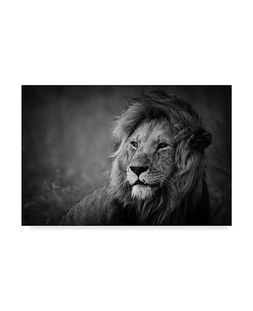 "Trademark Global Mohammed Alnaser 'Regal Lion' Canvas Art - 19"" x 2"" x 12"""
