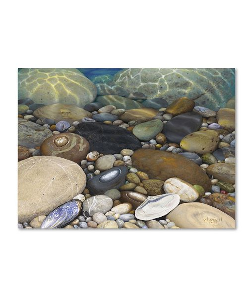 "Trademark Global Stephen Stavast 'Shoreline Treasures' Canvas Art - 32"" x 24"" x 2"""