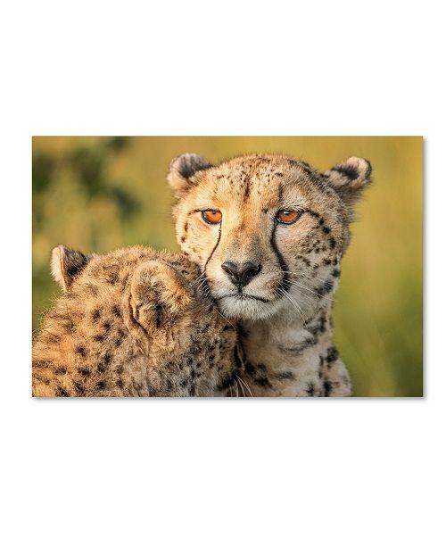 "Trademark Global Jaco Marx 'Cheetah Eyes' Canvas Art - 47"" x 30"" x 2"""