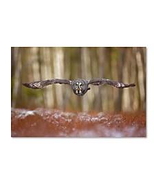 "Milan Zygmunt 'Great Grey Owl' Canvas Art - 32"" x 22"" x 2"""