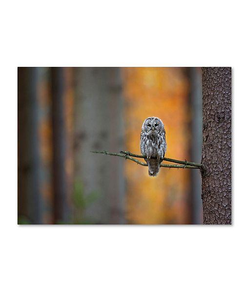 "Trademark Global Milan Zygmunt 'Tawny Owl' Canvas Art - 19"" x 14"" x 2"""