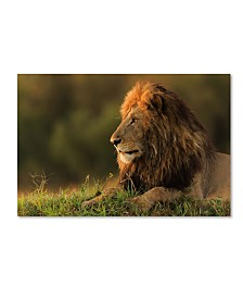 "Massimo Mei 'Male Lion Watching Sunrise In Masai Mara' Canvas Art - 32"" x 22"" x 2"""
