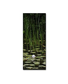 "Kurt Shaffer 'Marsh Lotus' Canvas Art - 14"" x 32"""