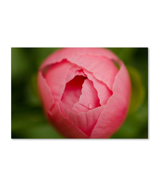 "Trademark Global PIPA Fine Art 'Peony Bud' Canvas Art - 16"" x 24"""