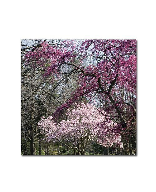 "Trademark Global Kurt Shaffer 'Mauve and Pink Flowering Trees of Spring' Canvas Art - 18"" x 18"""