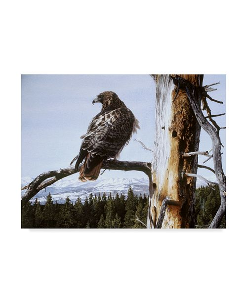 """Trademark Global Ron Parker 'Red Tailed Hawk' Canvas Art - 18"""" x 24"""""""