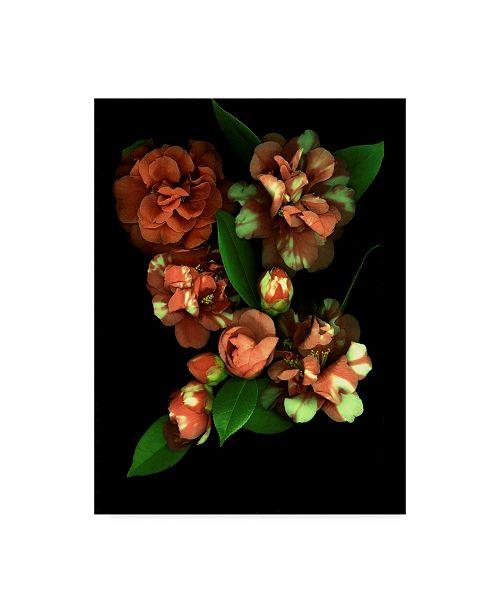 "Trademark Global Susan S. Barmon 'Camellia 3' Canvas Art - 18"" x 24"""