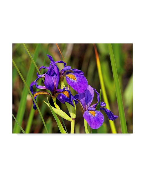 "Trademark Global J.D. Mcfarlan 'Iris 1' Canvas Art - 24"" x 18"""