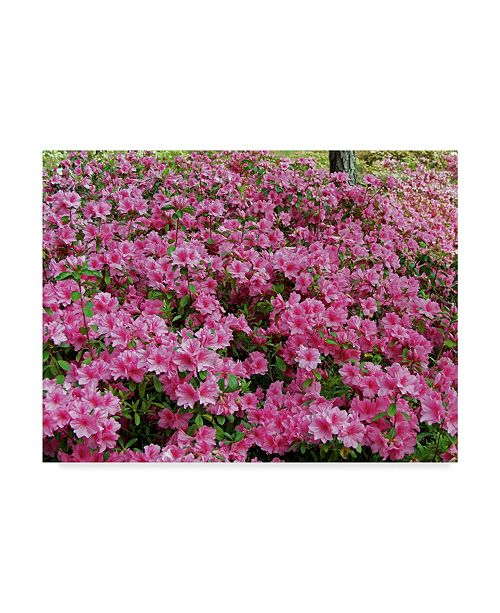 "Trademark Global J.D. Mcfarlan 'Pink Azaleas Coverage' Canvas Art - 19"" x 14"""
