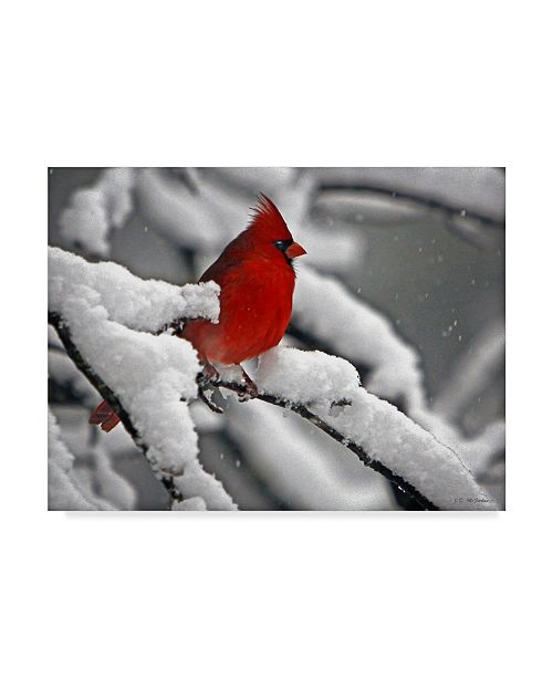 "Trademark Global J.D. Mcfarlan 'Cardinal In Snow' Canvas Art - 19"" x 14"""