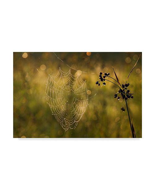 "Trademark Global Michael Blanchette Photography 'Web Of Dew' Canvas Art - 24"" x 16"""