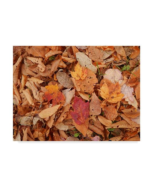 "Trademark Global Nina Marie 'Pile Of Leaves' Canvas Art - 19"" x 14"""