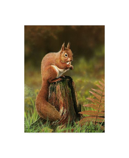 "Trademark Global Nigel Artingstall 'Red Squirrel On Stump' Canvas Art - 14"" x 19"""
