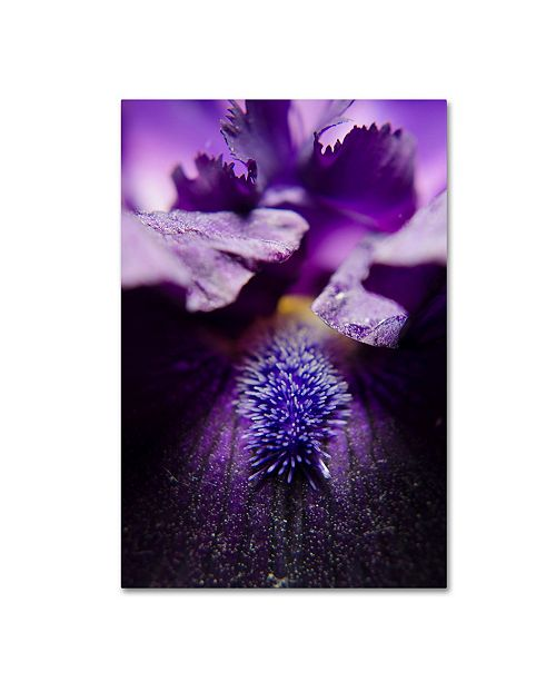 "Trademark Global PIPA Fine Art 'Stigma of Iris' Canvas Art - 30"" x 47"""