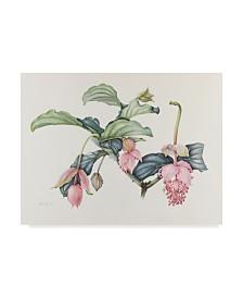 "Margaret Ann Eden 'Medinilla Magnifica' Canvas Art - 32"" x 24"""