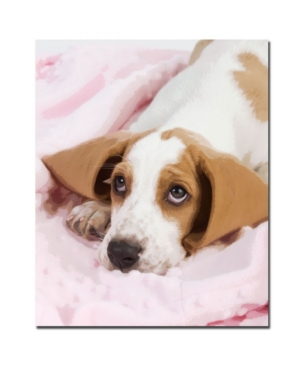 "Gifty Idea Greeting Cards and Such! 'Basset Pup in a Blanket' - 32"" x 26"""