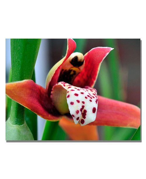 """Trademark Global Kurt Shaffer 'Little Red Orchid' Canvas Art - 32"""" x 24"""""""
