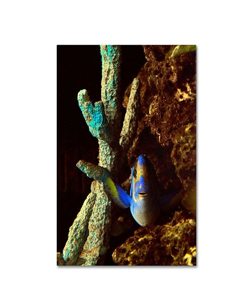 "Trademark Global Kurt Shaffer 'Fish in the Rocks' Canvas Art - 47"" x 30"""