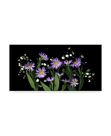 """Susan S. Barmon 'Asters And Babys Breath 2' Canvas Art - 12"""" x 24"""""""