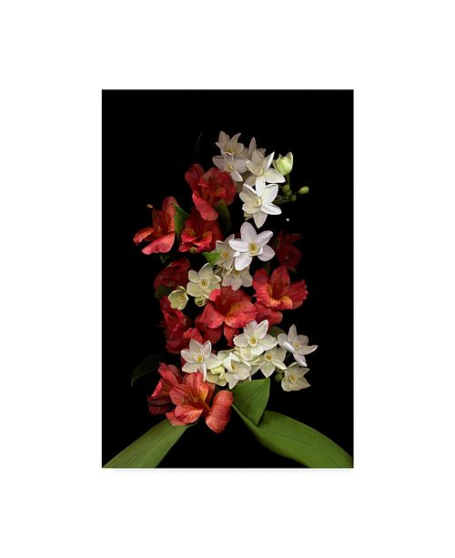 "Trademark Global Susan S. Barmon 'Paperwhites And Red Alstromeria' Canvas Art - 16"" x 24"""