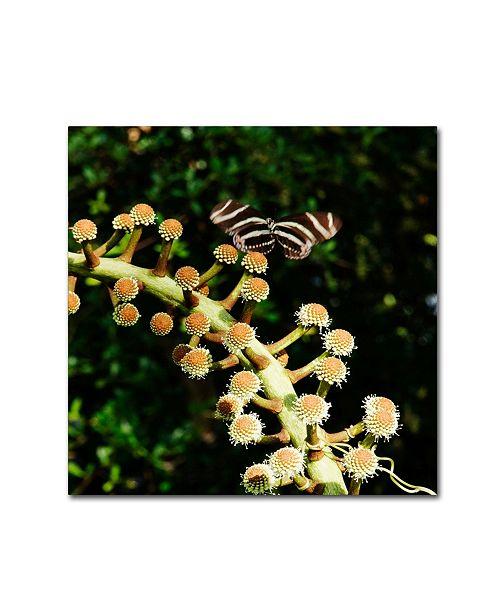 """Trademark Global Kurt Shaffer 'Zebra Longwing Butterfly' Canvas Art - 14"""" x 14"""""""