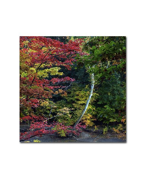 """Trademark Global Kurt Shaffer 'All the Colors of October in Ohio' Canvas Art - 14"""" x 14"""""""