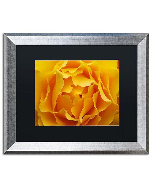 """Trademark Global Kurt Shaffer 'Hypnotic Yellow Rose' Matted Framed Art - 16"""" x 20"""""""