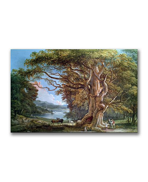 """Trademark Global Paul Sandby 'An Ancient Beech Tree 1794' Canvas Art - 47"""" x 30"""""""