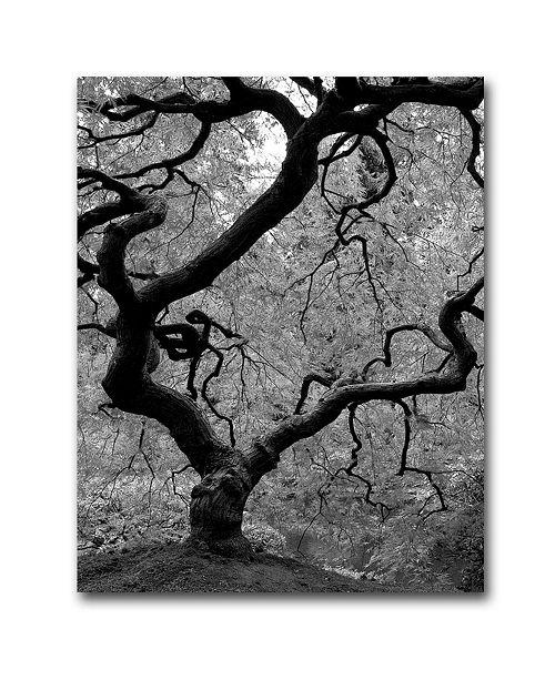 """Trademark Global David Farley 'Japanese Tree II' Canvas Art - 24"""" x 18"""""""