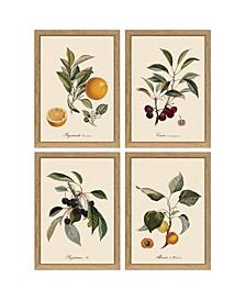"Set of 4 Botanical Fruit 6"" x 8"" Wall Art Designed by Henrik Dybdahl (easel frame can hang or stand) - Oakwood/Paper/Glass"