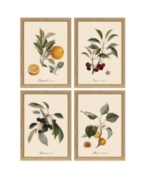 Set of 4 Botanical Fruit 6