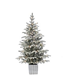 4.5Ft. Potted Lightly Flocked Natural Cut Iceland Fir with 70 Clear Lights