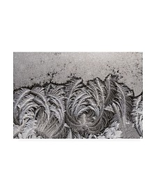 "Kurt Shaffer Photographs Crystal ice paisley patterns Canvas Art - 19.5"" x 26"""