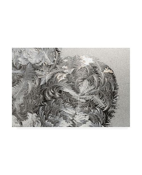 "Trademark Global Kurt Shaffer Photographs Paisley ice patterns on my window Canvas Art - 19.5"" x 26"""