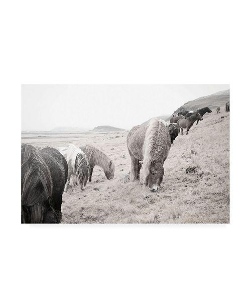 """Trademark Global Laura Marshall Horses of Hofn II BW Canvas Art - 27"""" x 33.5"""""""