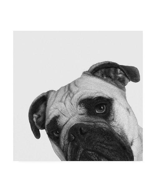 """Trademark Global Jon Bertell Que Pasa? Canvas Art - 36.5"""" x 48"""""""