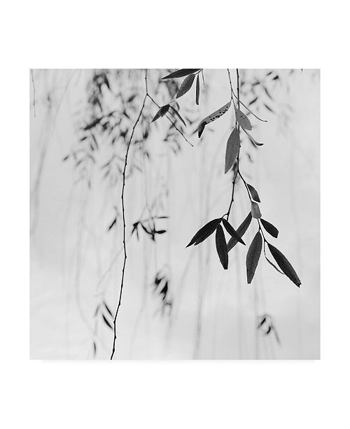 "Trademark Global Nicholas Bel Willow Print No. 3 Canvas Art - 15.5"" x 21"""