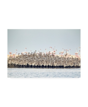 Joan Gil Raga Flamingos Nursery Canvas Art - 20