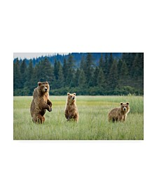 "Renee Doyle Alert Bears Canvas Art - 15"" x 20"""