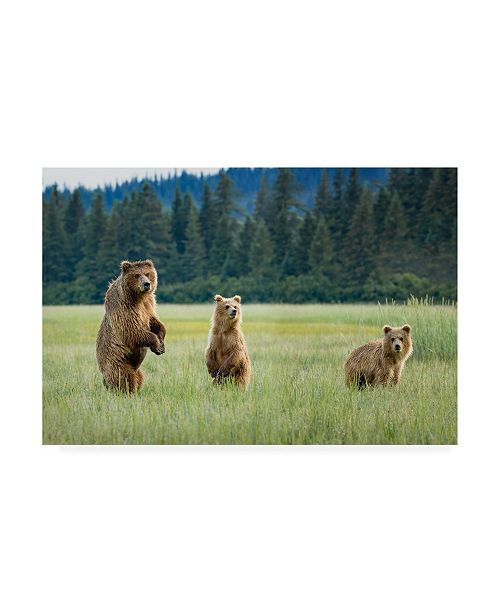 "Trademark Global Renee Doyle Alert Bears Canvas Art - 15"" x 20"""