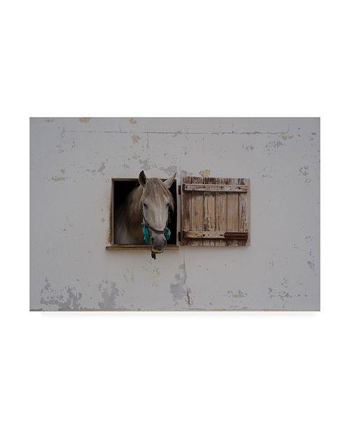 "Trademark Global Carey Coombs Ventania Canvas Art - 20"" x 25"""