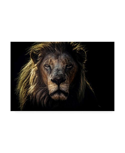 "Trademark Global Jackson Carvalho Face to Face Lion Canvas Art - 20"" x 25"""